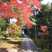 鹿王院:紅葉