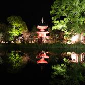 大覚寺:紅葉ライトアップ