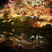 高台寺:紅葉ライトアップ
