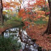糺の森 紅葉