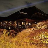 清水寺:桜ライトアップ